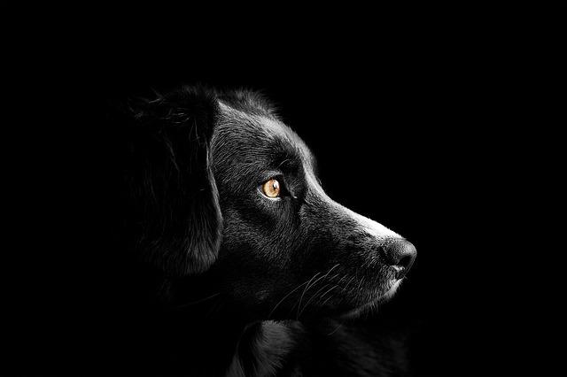 Royal Canin ist für Hunde und Katzen